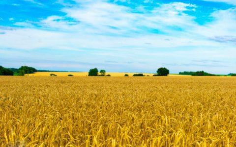 Звернення Синоду Єпископів Києво-Галицького Верховного Архиєпископства УГКЦ щодо аграрної реформи в Україні